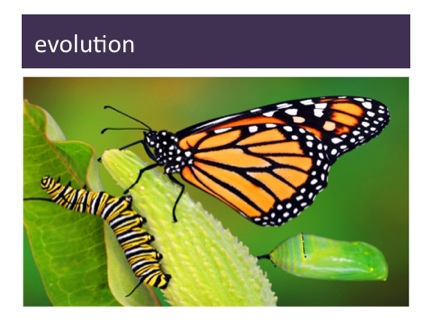 success-evolution